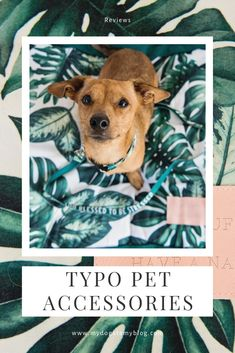 Typo has released a gorgeous new pet accessories range! Pet Beds, Dog Bed, Dog Mom Gifts, Dog Hacks, Dog Eating, Dog Boarding, Diy Stuffed Animals, Dog Accessories, Dog Owners