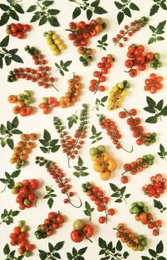 Fruit patterns. Repin Via: Brittany Watson Jepsen