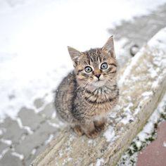 Kitten in the cold....brrrrrrr !