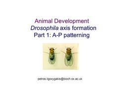 Animal Development Drosophila axis formation Part 1: A-P patterning