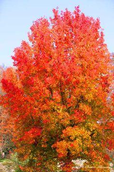 Amber Baum für später