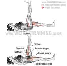 An isolation exercise. Synergists: Sartorius Pectineus Tensor Fasciae Latae Adductor Longus and Adductor Brevis. Abs and obliques only act as stabilizers. Hamstring Workout, Hip Workout, Workout Guide, Gym Workouts, At Home Workouts, Training Workouts, Leg Training, Weight Training, Compound Leg Exercises