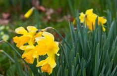 https://flic.kr/p/Ryn1nk | Kent Flora - Spring Churchyard | www.adamswaine.co.uk