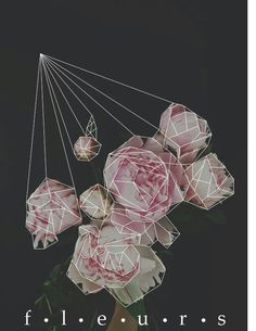 Peonies and Geometric Design