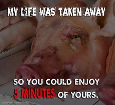 Would you give up 5 MINUTES if it meant saving a life? http://www.peta.org/living/vegetarian-living/why-pigs-should-be-friends-not-food.aspx #pigs #animals #vegan #govegan #eatinganimals #vegetarian #food #thinkaboutit #neverbesilent #animalrights #animalcruelty #takeaction