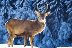 Gli #Animali dell'#Alpago  http://www.alpagocansiglio.eu/it/sport-e-natura/natura-in-alpago
