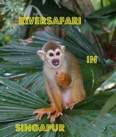 Auf Riversafari in Singapur wilde Tiere beobachten