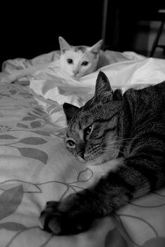 .Puchi & Chiro | kitties.
