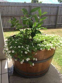 NEW French Half Oak Wine Barrel⁄ Barrel Planter Pot⁄ Herb Garden   Plants   Gumtree Australia Brisbane North East - Kedron   1063176674