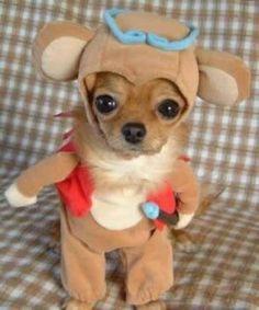 Designer Dog Clothes & Accessories