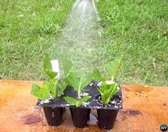 Regrow Hydrangeas From Cutting - Mist watering Smooth Hydrangea, Hydrangea Shrub, Hydrangea Colors, Hydrangea Care, Hydrangea Not Blooming, Propagating Hydrangeas, Planting Succulents, Planting Flowers, Veg Garden
