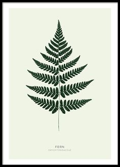 Kasviaiheiset taulut ja julisteet | Juliste, jossa vihreä jättipeikonlehden lehti