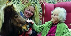 Pony trots in to nursing home to celebrate Chinese year of the horse
