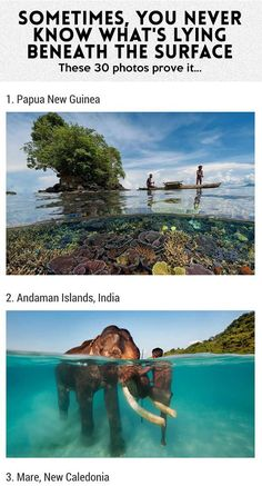 The Most Amazing Underwater Photographs It says 30 photos but there are only 28 lol