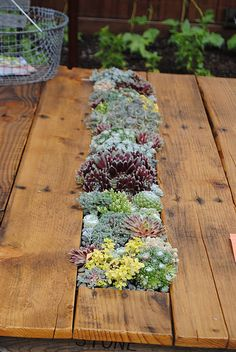 Succulents - DIY Succulent Table Recycled Pallets and Table Legs – Succulents Outdoor Garden Rooms, Outdoor Gardens, Succulents Diy, Planting Succulents, Diy Wood Projects, Garden Projects, Dinning Room Table Diy, Wooden Tables, Pallet Tables