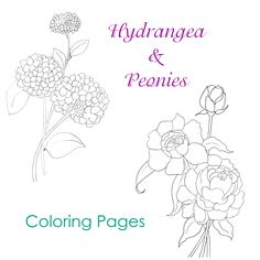 Hydrangea and Peony coloring pages or use them as patterns for crafting, painting, embroidery or transfers! Free Adult Coloring Pages, Flower Coloring Pages, Free Printable Coloring Pages, Colouring Pages, Coloring Books, Coloring Stuff, Coloring Sheets, Autumn Painting, Peony Painting