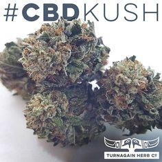 Meet #CBDKush: Low #THC + #CBD ~7%. Good for #pain, #inflammation and #stress. #THCo #Alaska #girdwood #GirdwoodTHC #marijuana #cannabis #medicamarijuana #medicalcannabis