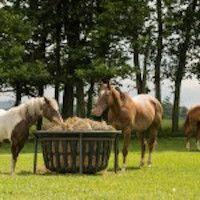 Best Equine Hay Bask