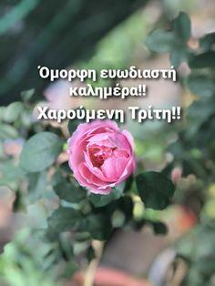 Good Morning, Buen Dia, Bonjour, Good Morning Wishes
