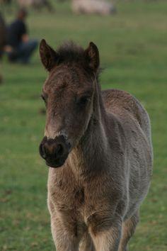 Wild Horse foals of Sweetiie