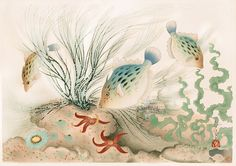 Familiar Fishes of Nippon c1938 11 by 15 1/2 inches from Bakufu Ohno Familiar Fishes, Flowers & Birds 1888-1976