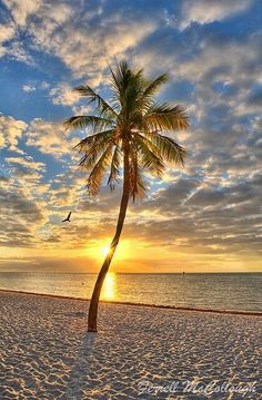 Key West, Florida ... sunrise on Smathers Beach in the summer