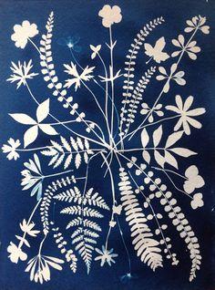 Botanical Illustration, Illustration Art, Illustrations, Fabric Painting, Watercolor Paintings, Sun Prints, Cyanotype, Linocut Prints, Botanical Prints