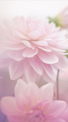 Beautiful Flowers Wallpapers, Beautiful Roses, Pretty Flowers, Pink Flowers, Frühling Wallpaper, Flower Wallpaper, Wallpaper Backgrounds, Spring Photography, Photography Flowers