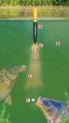 How to make a bagging waggler rig for catching big carp match weights