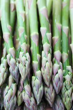 Growing asparagus in Minnesota home gardens : Vegetables : Yard and Garden : University of Minnesota Extension