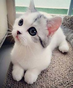 Cutest Cat with Black Eyes.
