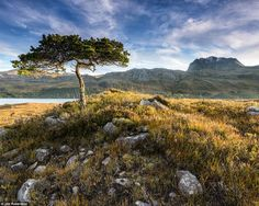 Photographer Jim Robertson' sentry was this stunning image Towards Slioch at dawn, from Loch Maree, Wester Ross, Scotland Wales, Wester Ross, Isle Of Arran, England, Scottish Highlands, British Isles, Landscape Photographers, Landscape Photos, Beautiful Landscapes
