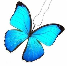 Real Butterfly Wing Necklace / Pendant (WHOLE Iridescent Blue Morpho Menelaus Butterfly - W021) - Buy 2 Get 1 Free on Etsy, $26.00
