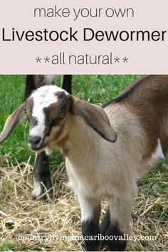Small animals and livestock can easily get worms. Here is a recipe to make your own natural herbal dewormer. Safe for chickens, goats, sheep, pigs and other barnyard livestock. Feeding Goats, Raising Goats, Chicken For Dogs, Chicken Feed, Backyard Farming, Chickens Backyard, Baby Chickens, What To Feed Rabbits, Cabras Boer