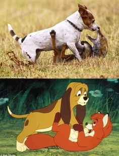 """""""The Fox And The Hound"""" In Real Life...I think I just died a little. Precious"""