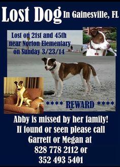 "@animalcommando:   RT!‼️  Missing dog  ➡️Gainesville Florida ⬅️ #share  pic.twitter.com/Imw0wehPxV"""