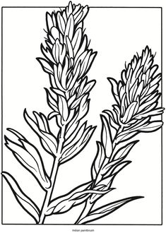 Welcome to Dover Publications: Creative Haven Wildflowers Stained Glass Coloring Book