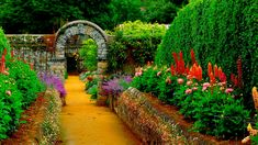 ca. 1960-1994 --- Raised beds of dahlias and lupins flank the path leading to a stone arch covered with clematis. Erigerons grow on the granite retaining walls. UK, ca. 1960-1994. --- Image by © Michael Boys/CORBIS