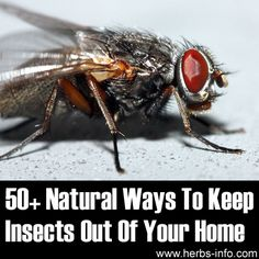 ❤ 50+ Natural Ways To Keep Insects Out Of Your Home ❤
