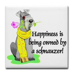 Schnauzer love #spoiledbubby #mydogismyson
