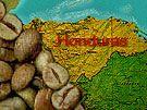 Honduras SHG Marcala Fair Trade Organic 10 lb Coffee Roasting, Honduras, Fair Trade, Green Beans, Organic, Fair Trade Fashion, Green Bean