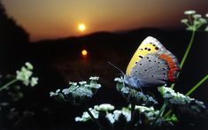 Butterfly nature - Yahoo Image Search Results