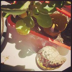 Peça tomando sol no mini jardim - queima Raku - série Passagem - by Isabela Darcie