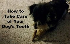 How to Take Care of Your Dog's Teeth + Sweepstakes #ad