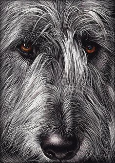 Wolfhound by Elena Kolotusha Scratchboard/Ink. LOVE that this is on scratchboard! Big Dogs, Cute Dogs, Dogs And Puppies, Doggies, Irish Wolfhound Dogs, Scratchboard Art, Lurcher, Wow Art, Dog Paintings