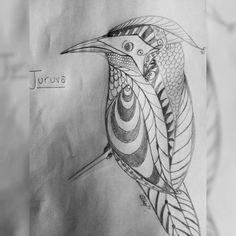 Juruva bird. Drawing practice