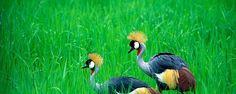 Lochinvar National Park Zambia   Trip to the untamed Zambia