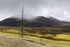Dead forest Kamchatka photo tour Denis Budkov