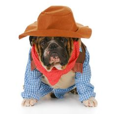 January 14th -- National Dress Up Your Pet Day