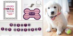 Pooch Puppy Party Theme - Chevron Girl